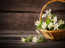 Snowdrops in basket Royalty Free Stock Image