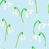 Snowdrops on a blue background. Spring vector illustration. Royalty Free Stock Photography