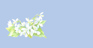 Snowdrops Blumenkarte Lizenzfreie Stockbilder