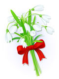 Snowdrops bouquet vector illustration