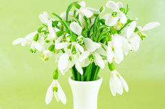 Snowdrops bouquet Stock Image