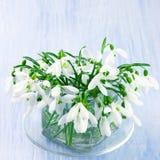 Snowdrops bouquet Stock Photo