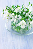 Snowdrops bouquet Stock Photo