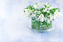 Snowdrops bouquet Stock Images