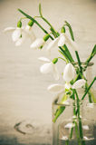 Snowdrops bouquet Royalty Free Stock Photos
