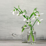 Snowdrops bouquet Stock Photos