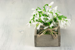 Snowdrops bouquet Royalty Free Stock Photography
