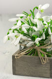 Snowdrops bouquet Stock Photography