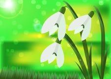 Snowdrops brancos bonitos em um fundo verde da iluminação Fotografia de Stock Royalty Free
