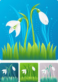 Snowdrops buds. First snow drops - high quality detailed abstract spring illustration in four different color combination Stock Photography