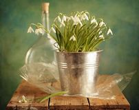 Snowdrops bunch Stock Images
