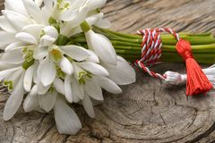 Snowdrops bunch on wooden background. stock image