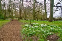 Free Snowdrops By The Path Stock Images - 140616704
