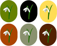 Snowdrops. Cartoon colored snowdrops on a colored background Royalty Free Stock Photography