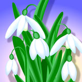 Snowdrops - Close-up Royalty Free Stock Photos
