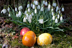 Snowdrops and colored eggs Royalty Free Stock Images