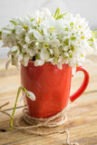 Snowdrops in a Cup. Beautiful delicate snowdrops in a red Cup with a thread on a wooden background concept of spring and flowers Royalty Free Stock Photos