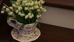 Snowdrops in cup on table i. Beautiful snowdrops in cup on table stock video