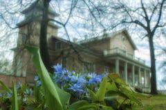 Snowdrops de florescência na propriedade nobre Imagens de Stock