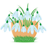 Snowdrops are in egg shell  illustration Royalty Free Stock Photography