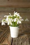 Snowdrops em um vaso de vidro na tabela de madeira velha Fotos de Stock Royalty Free