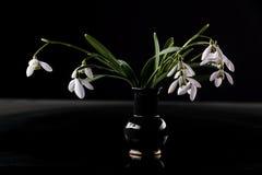 Snowdrops en florero Imágenes de archivo libres de regalías
