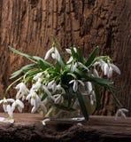 Snowdrops en florero Fotos de archivo libres de regalías
