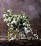 Snowdrops en florero Fotos de archivo