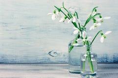 Snowdrops en floreros Imágenes de archivo libres de regalías