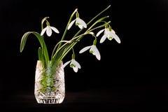 snowdrops för crystal exponeringsglas Fotografering för Bildbyråer