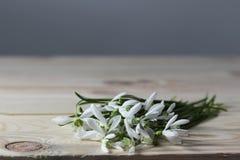snowdrops Fiori della primavera sulla tavola di legno fotografie stock