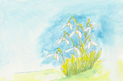 Snowdrops flowering in spring Royalty Free Stock Photography