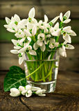 Snowdrops in the glass Royalty Free Stock Photography
