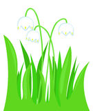 Snowdrops in grass Royalty Free Stock Photography