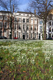 Snowdrops in The Hague Stock Images