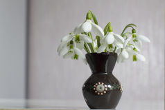 Snowdrops im Vase Stockfoto