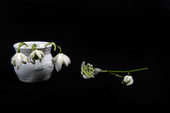 Snowdrops in Jar and on Black Surface. Front view of two snowdrops lying on black surface.  Three white snowdrops in in small vase.  Copy space. Horizontal photo Royalty Free Stock Photography