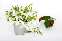 Snowdrops in little tin bucket Stock Images