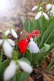Snowdrop spring flowers with martenitsa. Baba Marta day royalty free stock photos