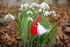 Snowdrop spring flowers with martenitsa. Baba Marta day royalty free stock photography