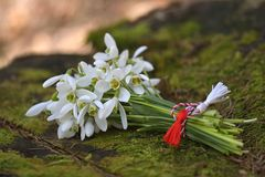 Snowdrops in nature stock photography