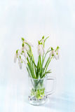 Snowdrops on a rustic background Stock Photos