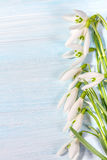 snowdrops on rustic background Royalty Free Stock Photo