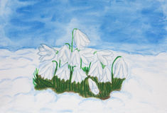 Snowdrops in snow, watercolor Stock Image