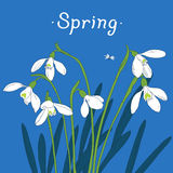 Snowdrops spring bouquet. Hand-drawn  illustration Stock Photos