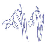 Snowdrops spring bouquet Royalty Free Stock Photography