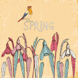 Snowdrops. Spring flowers. Vector illustration in vintage style Stock Photo