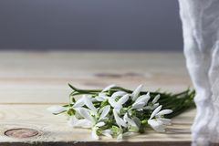 Snowdrops. Spring flowers on the wooden desk. royalty free stock photos
