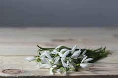 Snowdrops. Spring flowers on the wooden table. stock photos