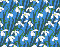 Snowdrops spring seamless background. Hand-drawn Stock Photography